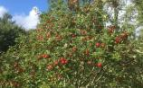 Annual Apple and a new Taste Leitrim Harvest Feast
