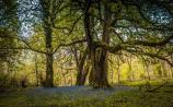 Ireland's first Woodland Festival in Killegar this Sunday, August 25