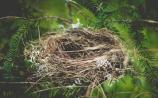 empty nest
