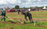 Horse power at the National Ploughing