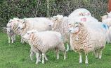 Revealed: Number of Kilkenny sheep farmers who received €10 for each eligible ewe
