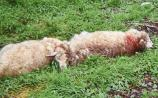 Pet owners must be held responsible for their animals says farming organisation
