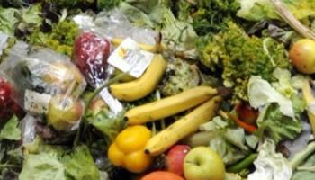 Ireland generates over one million tonnes of food waste annually