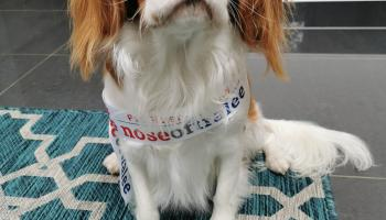 Help top dog, Mr Wilson, win this year's Nose of Tralee for Leitrim!