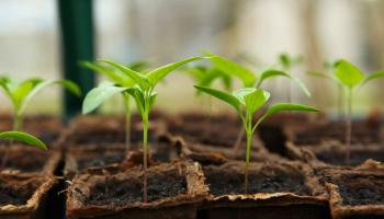 Over €16,000 allocated to Leitrim community garden projects