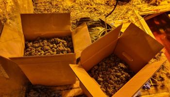 Gardaí seize €150,000 worth of suspected cannabis plants in Monaghan