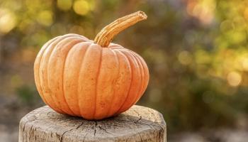 A-list actor broke into Irish pumpkin farm