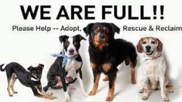 """""""We are full"""" Leitrim Animal Welfare can't take in any more dogs"""