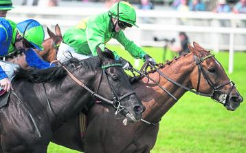The Punter's Eye Horse Racing Tips