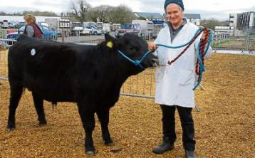 Steady trade for Angus at Carrick Show and Sale