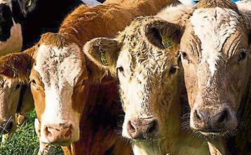 Leitrim farmers paid €13m under Basic Payment Scheme