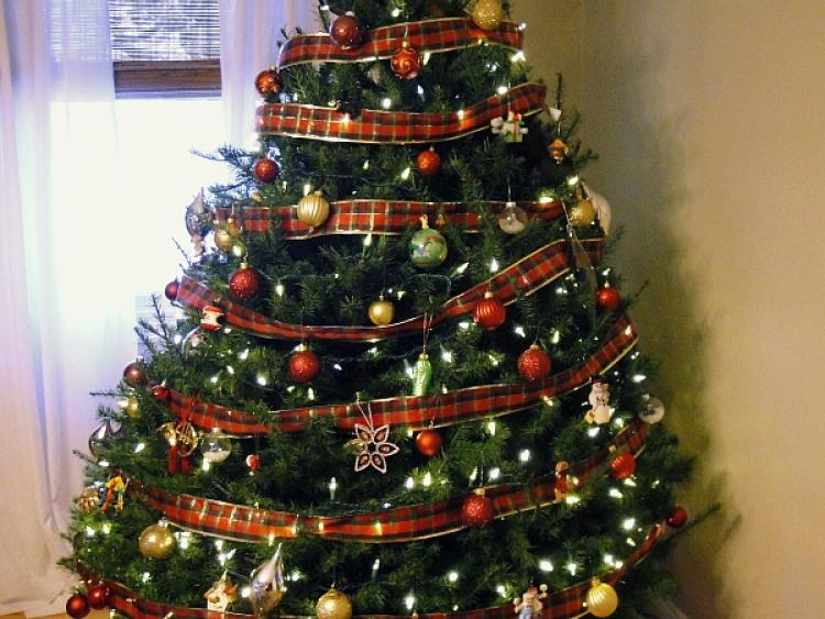 settling that age old debate when it is ok to put up the christmas tree - When To Put Up Christmas Tree