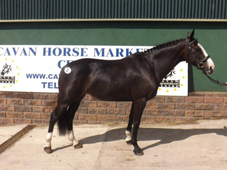 Mohill Magic Pony Hits Top Sale Price Of 13 000